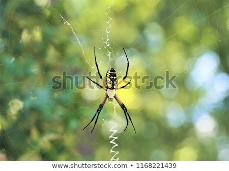 kert · pók · kereszt · áll · támadás · pozició - stock fotó © pictureguy