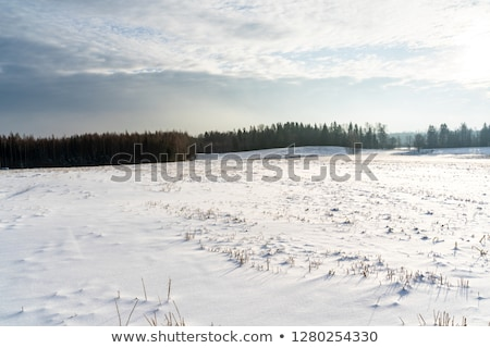 snow covered field and trees in the snow on a background of blue stock photo © alinamd