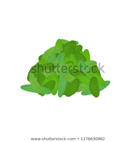 bunch of cucumber. lot of vegetables. big crop on farm Stock photo © popaukropa
