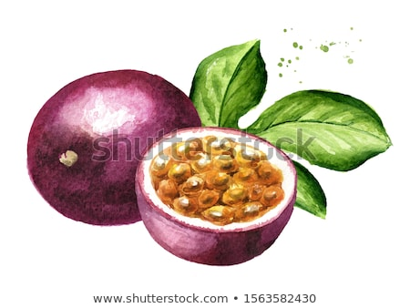 watercolor illustration of passionfruit stock photo © sonya_illustrations