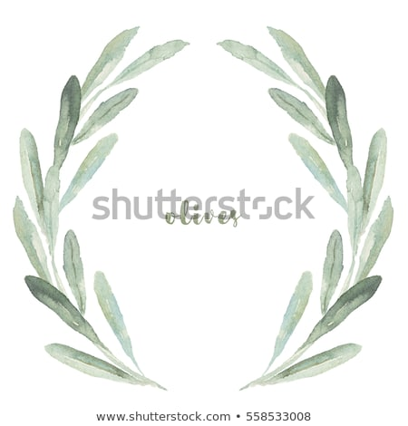 оливкового филиала акварель рисованной иллюстрация продовольствие Сток-фото © jara3000