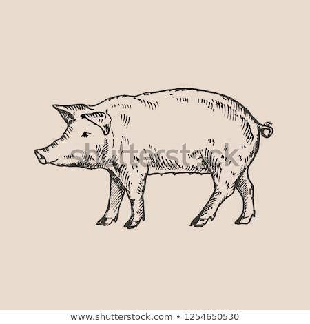 domuz · domuz · eti · çiftlik · akşam · yemeği · şef · et - stok fotoğraf © rastudio