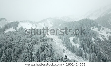 View from height to the winter forest covered with snow Stock photo © vlad_star