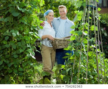 young couple between bean plants stock photo © is2