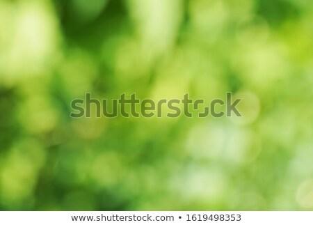 gyönyörű · zöld · friss · bokeh · hatás · húsvét - stock fotó © wdnetstudio
