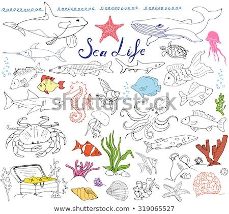 Animales garabato cangrejo ilustración papel Foto stock © colematt