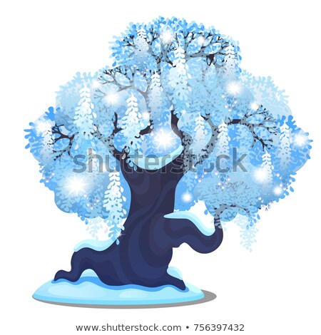 Sketch for Christmas poster with beautiful tree with spreading weeping crown. Template for greeting  Stock photo © Lady-Luck