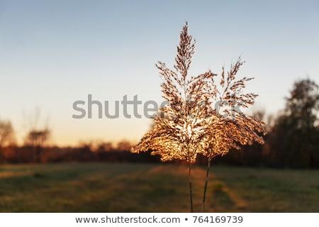 Sceniczny zdjęcie łące pełny imponujący Zdjęcia stock © fanfo