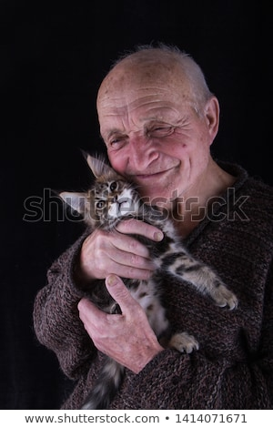 Foto stock: Adulto · senior · Maine · gato · bonito · sessão