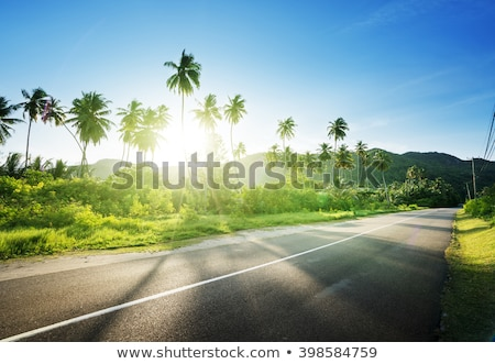 foliage green forest with asphalt road on sunny day natural beautiful background aerial view from stock photo © artjazz