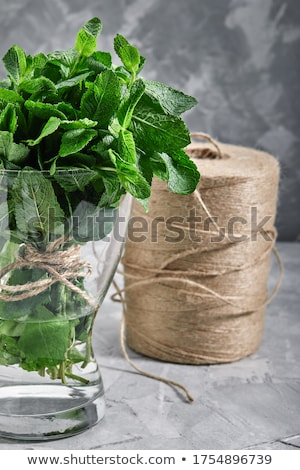 plant mint grows in nature background Stock photo © romvo