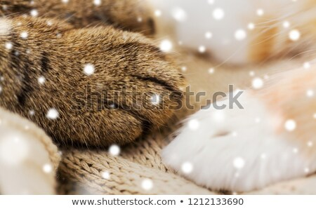 close up of red cat paw on blanket over snow Stock photo © dolgachov