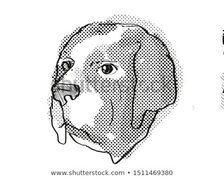Saint Bernard Dog Breed Cartoon Retro Drawing Stock photo © patrimonio