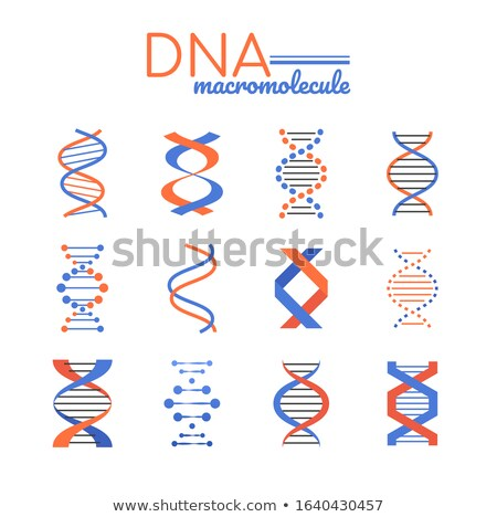DNA macromolecule - line design style vector elements Stock photo © Decorwithme