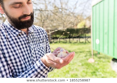 Man holding a pigeon chick in pigeon loft Stock photo © Kzenon