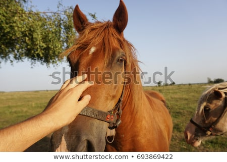 teen stroking horse stock photo © photography33