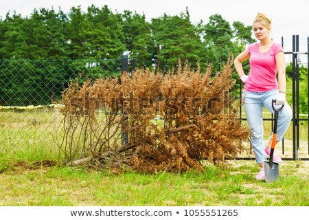 Woman digging with a shovel Stock photo © photography33