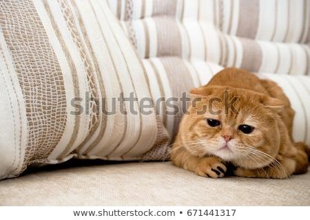 肖像 · 猫 · 緑 · ソファ · 自然 · 髪 - ストックフォト © mikko