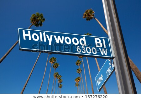 Hollywood Blvd street sign with tall palm trees.  Stock photo © meinzahn