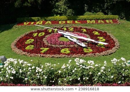 Grande flor relógio Suíça mão ginásio Foto stock © dacasdo