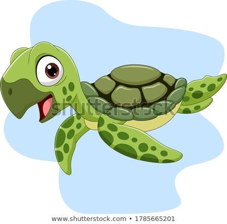 Teknős rajzfilmfigura vektor rajz illusztráció aranyos Stock fotó © fizzgig