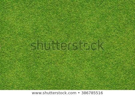 ストックフォト: 草 · 孤立した · 緑の草 · 白 · 背景 · フィールド