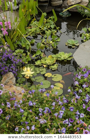 small pond and garden Stock photo © FrameAngel