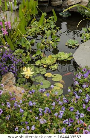池 · 造園 · 水生の · 植物 · 自然 · 岩 - ストックフォト © frameangel