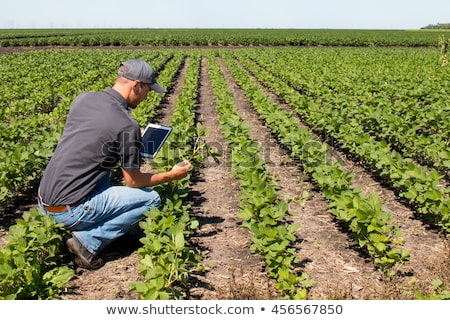 Agronomist with tablet computer in corn field Stock photo © stevanovicigor