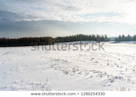 Winter landscape trees snow covered fields windmills Stock photo © fotoaloja