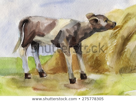 watercolor illustration of a calf eating hay Stock photo © artibelka