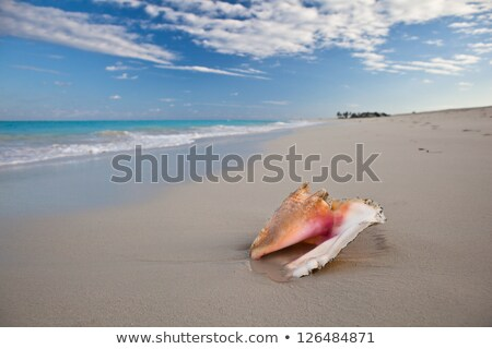 turks and caicos islands stock photo © istanbul2009