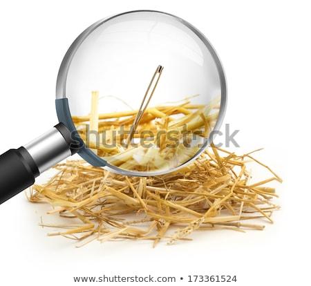 a needle in a haystack Stock photo © alexandrenunes