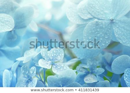 Jóvenes flor rocío gotas naturaleza fondo Foto stock © mady70