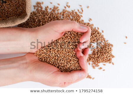 Handful of harvested wheat grains heart-shaped pile, top view Stock photo © stevanovicigor