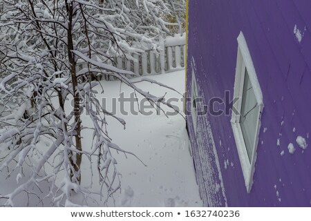 A closed window with a view of the fence at the yard Stock photo © bluering
