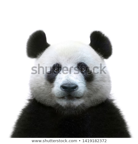 Panda négy Pentagon forma bambusz keret Stock fotó © bluering