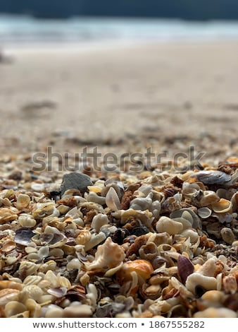defocused seashells on beach Stock photo © Mikko