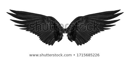stilizált · szárnyak · festett · művészet · madár · sas - stock fotó © blackmoon979