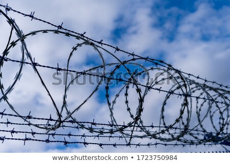 Barbed wire on blue sky background Stock photo © luissantos84