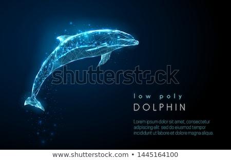 glowing dolphin Stock photo © blackmoon979