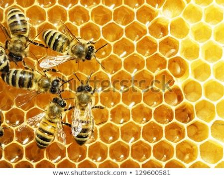 macro · trabalhando · abelha · mel · natureza · fundos - foto stock © kayros
