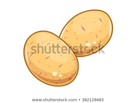 Сток-фото: картофель · белый · изолированный · реалистичный · иллюстрация · кухне