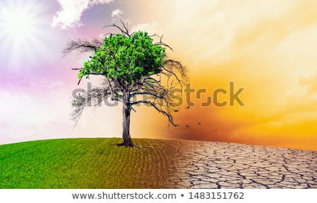 Dry land and green grass Stock photo © bluering