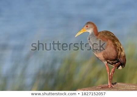 Reus portret kleurrijk gezicht vogel outdoor Stockfoto © EcoPic