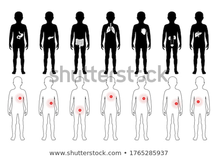 An Anatomy of Boy Silhouette Lung  Stock photo © bluering