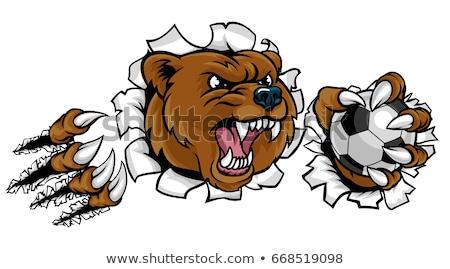 bear holding soccer ball breaking background stock photo © krisdog