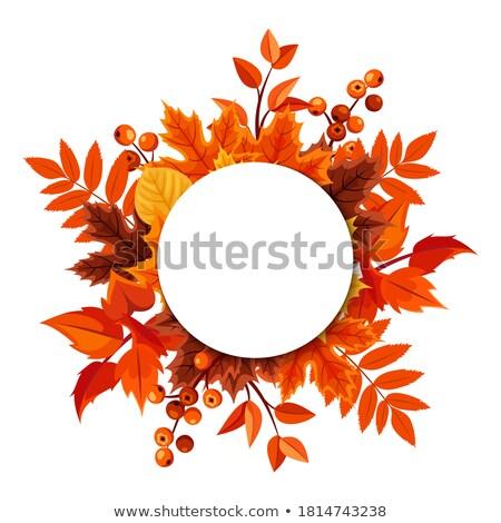 Thanksgiving Blank Banner Stock photo © Lightsource