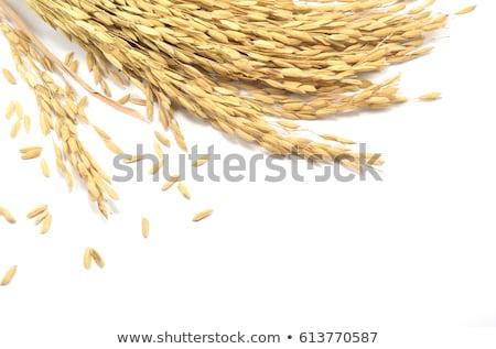 Arroz isolado branco comida madeira verde Foto stock © ungpaoman
