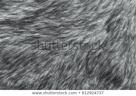 brun · peau · animaux · texture - photo stock © ivo_13